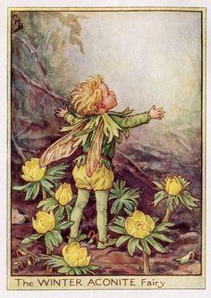 Winter monnikskap Flower Fairy Vintage Print, c.1950 Cicely Mary Barker-boekillustratie plaat