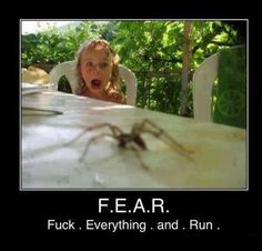 F.E.A.R. - Fuck . Everything . and . Run . ---- Hahaha