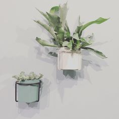 Plant Wall, Wall Storage, Plant Holders, Indoor Plants, Pots, Shelf, Garden, Instagram Posts, Flowers