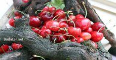 Čerešne sú bezpochyby jedno z najchutnejších ovocí leta. No vedeli ste, že nielen ony, ale aj ich stopky sú nadmieru cenné pre vaše zdravie?