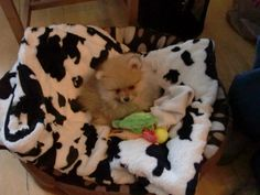 """My dog....""""King""""...in his bed....;-)"""