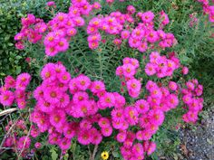 Terrace Garden Design, Garden Plants, October, Flowers, Royal Icing Flowers, Flower, Florals, Floral, Blossoms