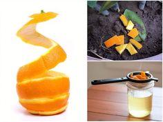 Cantaloupe, Carrots, Fruit, Vegetables, Sodas, Plant, Carrot, The Fruit, Vegetable Recipes