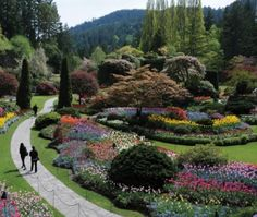 I have always wanted to go see the Butchart Gardens in Vancouver Island, Canada. This is area is called the Sunken garden lawn. Montreal Botanical Garden, Botanical Gardens, Buchart Gardens, Dwarf Plants, Sunken Garden, Royal Garden, Public Garden, Garden Features, Garden Photos