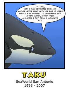 Gender: Male Born: September 9th 1993 Died: October 17th 2007 Age at Death: 14 Years Parks Held At: SeaWorld Orlando, SeaWorld San Antonio Born to Katina, sired by Tilikum and younger brother...