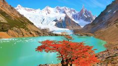 Autumn tree by the lake near Cerro Torre mountain, Los Glaciares National park, Argentina, b4a6cc5b21ef78a69f6bba8fa400d810