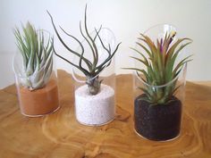 Glass air plant terrarium