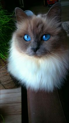 This cat is WAY prettier than I am....and I think I'm okay with that, it's beautiful!!