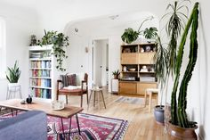 Jaclyn Campano interiors, navajo rug, green plants, white walls, rich wood floor, color organized bookcase
