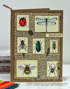 StampingMathilda: Art Journey - Nature insects
