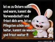 Die 40 Besten Bilder Von Ostern Lustig Funny Jokes Jokes Und