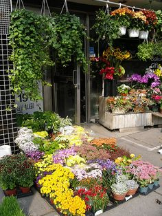 Flower Market, Queen St. in the Beaches area, Toronto by **Mary**, via Flickr