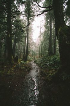 Old forests that smell like old wet earth.