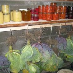 New fruit and vegetables storage root cellar Ideas Underground Cellar, Fruit And Vegetable Storage, Root Cellar, Bountiful Harvest, Fresh Fruits And Vegetables, Store Vegetables, Winter Vegetables, Gardening Vegetables, Veggies