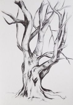 Original graphite drawing, Tree drawing, tree painting, Nature Landscape, Original Drawing, Sketch