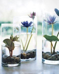 """Lily Pond in a Vase: Showcase water lilies in your home with these elegant displays, creating an impression of an aquatic garden. Use water lilies to make an indoor """"pond"""" arrangement, substituting galax leaves for the much larger lily foliage."""