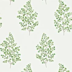 Sanderson - Traditional to contemporary, high quality designer fabrics and wallpapers | Products | British/UK Fabric and Wallpapers | Angel Ferns (DMAY211995) | Maycott Wallpapers