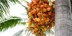 Olio di palma: traffico di esseri umani, violenze e abusi in Malesia. Il prodotto arriva a Nestlé e Procter