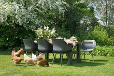 Kippen bij de tuinse