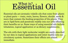 FAQs on Young Living Essential Oils. What are essential oils, what's so special about Young Living, what are sesquiterpenes, what is adulteration,. What Are Essential Oils, Thieves Essential Oil, Essential Oil Uses, Doterra Essential Oils, Young Living Essential Oils, Yl Oils, Living Essentials, Young Living Oils, Alternative Health