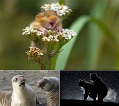 Snap of dormouse among winners at Comedy Wildlife Awards