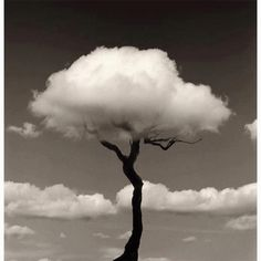 Tree cloud #KEEN #recess