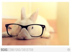 Hipster bunny <3