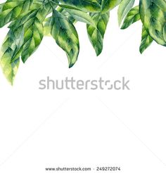 watercolor green leaves on white background