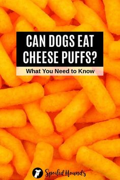 Can dogs eat Cheetos? Keep your dog safe and find out what you need to know about dogs eating Cheetos, cheese puffs, and puffed cheese balls. #dogsafety #doghealth #dogs #doglovers #doginformation #dogownertips #pethealth #cheetos
