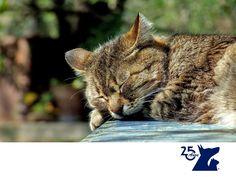 Envenenamiento en gatos. CLÍNICA VETERINARIA DEL BOSQUE. Los gatos son mascotas curiosas y por ello exploran todo a su alrededor. Sin embargo, pueden correr el riesgo de envenenarse o intoxicarse con productos de limpieza, insecticidas o chocolate, por mencionar algunas causas. En Clínica Veterinaria del Bosque recomendamos traer de inmediato a tu gato si presenta síntomas como dificultad respiratoria, convulsiones, vómitos o salivación excesiva. www.veterinariadelbosque.com #veterinaria