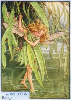 Fairies have taken rare vintage images from the early 1900's and reproduced them on canvas. Cicely Mary Barker, Willow Flower, Willow Tree, Willow Leaf, Flower Tree, Weeping Willow, Fairy Land, Fairy Tales, Elfen Fantasy