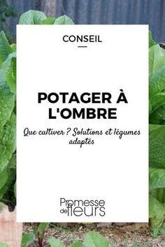 Installer un potager à l'ombre, c'est possible : découvrez les légumes adaptés et nos solutions pour tirer parti du moindre rayon de soleil.
