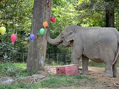 The Elephant Sanctuary in Tennessee provides captive elephants a safe haven dedicated to their well-being. Elephant World, African Elephant, Beautiful Creatures, Animals Beautiful, Cute Animals, Elephants Never Forget, Elephant Pictures, Big Friends, Elephant Illustration