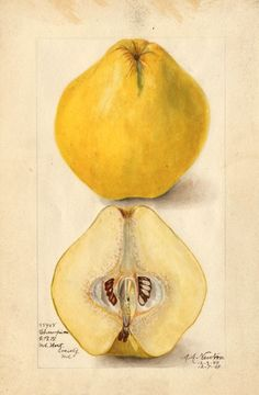 quince. keep one in your laundry for a lovely smell
