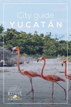 Notre road trip / itinéraire de 9 jours dans la péninsule du Yucatan. Découvertes culinaires, sites Maya, réserve naturelle et plages de rêve.