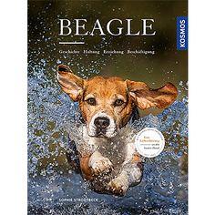 Beagle – Geschichte Haltung Erziehung Beschäftigung