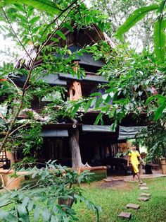 Banyan Camp, Hambega
