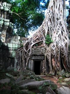 Ta Prohm Temple in Angkor, Cambodia. Tomb Raider was filmed here! Natural Structures, Natural Forms, Theme Design, Man Vs Nature, Natural Architecture, Vietnam Tours, Urban Nature, A Level Art, Japan Photo