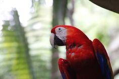 Lapas, ZooAve,Costa Rica
