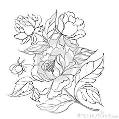 peony line drawing - Google Search