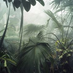 This jungle shows us exotic plants which look very unique. It is very misty which gives you an creepy feeling something is gonna crawl up behind you. Foto Nature, Plants Are Friends, Horticulture, Belle Photo, Palm Trees, Planting Flowers, Greenery, Plant Leaves, Design