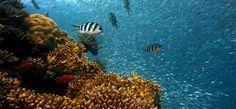 Scienza: #Barriere #coralline e #pesci: un legame a doppio filo (link: http://ift.tt/2bBq81e )