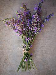lavender bouquet simple