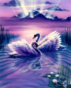 Swans Of Morning ❤ - Artist Sue Dawe
