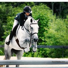 Animals Images, Animals And Pets, Jumping Horses, Cute Ponies, Florida Style, English Riding, Hunter Jumper, Show Jumping, Horse Care