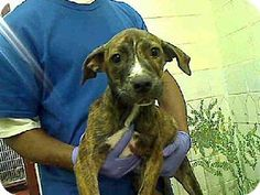Act quickly to adopt SARA. Pets at this Shelter may be held for only a short time.