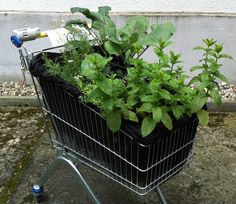 """The Gemüse Korb (Vegetable Basket) project started in 2010 as a mobile garden made from abandoned grocery carts. Over 15 carts have been st..."