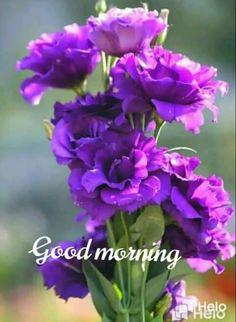 Good Morning Roses, Good Morning Beautiful Quotes, Good Morning Beautiful Images, Happy Morning, Beautiful Photos Of Nature, Morning Wish, Beautiful Flowers, Good Morning Greeting Cards, Good Morning Greetings