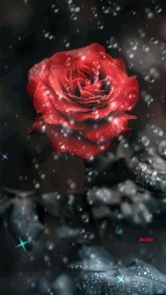 Every Rose, Amazing Gifs, Rose Images, Glitter Graphics, Good Morning Wishes, Beautiful Roses, Paradise, Artsy, Butterfly