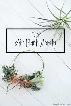 This modern DIY Air Plant Wreath is easy and perfect for any holiday! Plus a link on how to care for tillandsia. #holiday #wreath #decor #homedecor